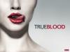 Bleeding through the Seasons: Season1